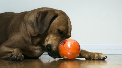 担心宠物在家寂寞或捣乱?PlayDate 智能玩具球可让你远程陪玩