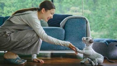 你们期待许久的索尼 aibo 机器狗来了,不过充电 3 小时只能蹦跶 2 个钟