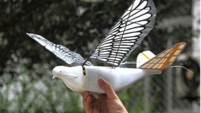 骗过了真正的鸽子,这款「Dove」新型无人机有点意思
