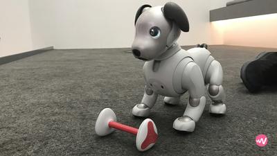 索尼 aibo 机器狗将于 9 月在美发售,会比日本市场卖的更好吗?