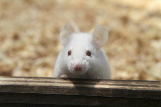 一只「老鼠」的蜕变,鼠标也疯狂