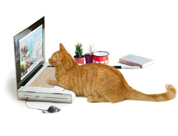 Cat Scratch Laptop 喵星人专用笔记本_1