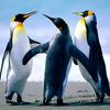 Uploads%2fusers%2favatar%2f1073139167%2fthumb penguins